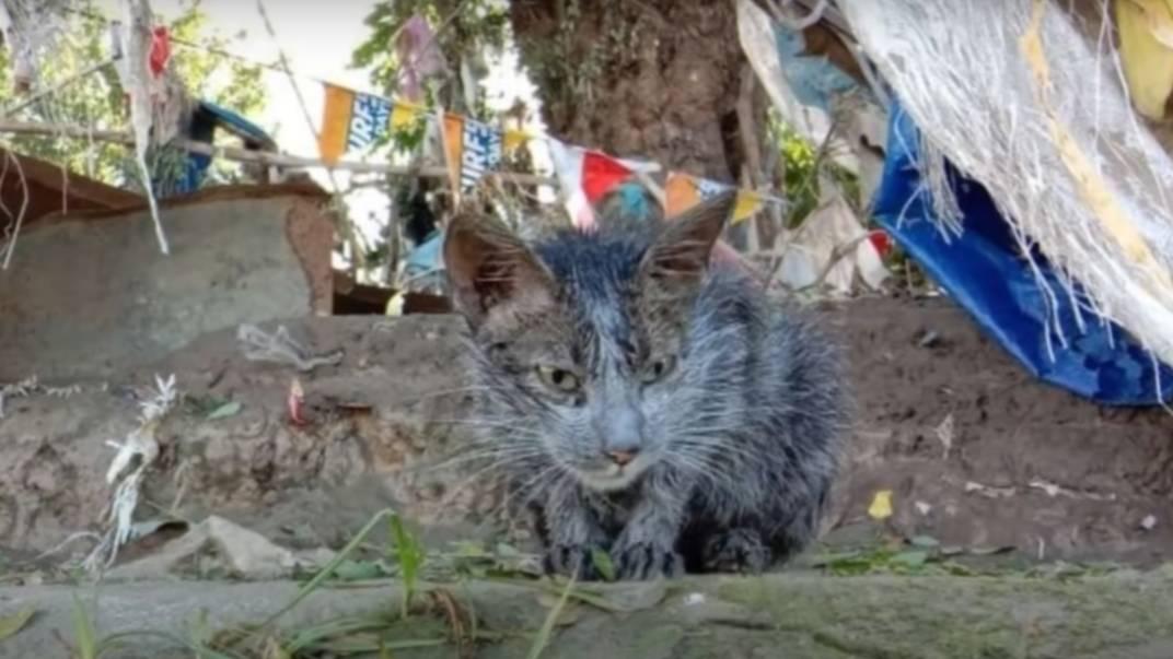 Девушка спасла грязного больного котёнка после тайфуна, и уже через месяц он стал настоящим красавцем