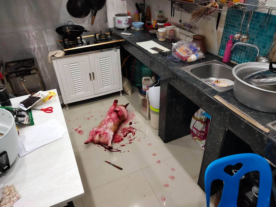 Фото © Facebook / BLABLA-b๋oo - Premium Dog Cafe คาเฟ่หมาหอนอยุธยา