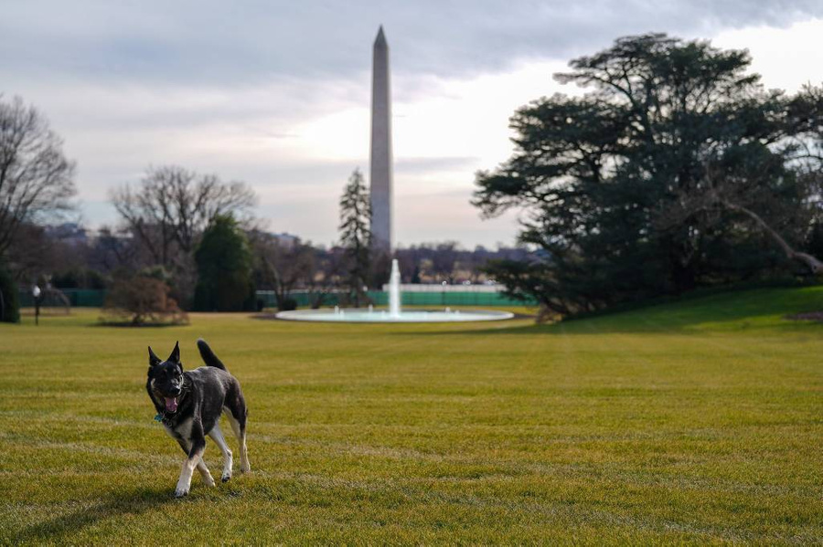 Фото © Twitter / The Oval Pawffice