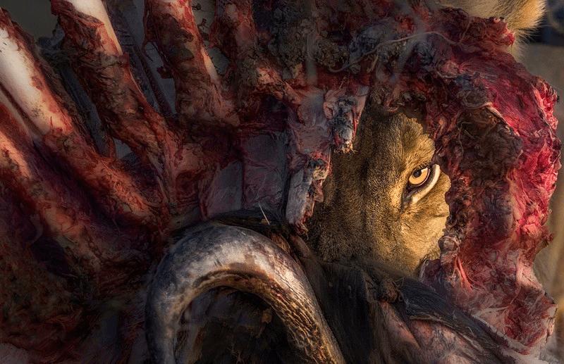"""""""Повсюду лилась кровь, но это не самое страшное"""". 6 фото дикой природы, о которых можно снять фильм"""