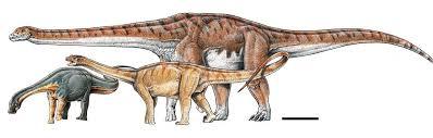 Титанозавр в сравнении с лимайским ящером (слева) и андезавром (справа). Фото © sciencedirect.com