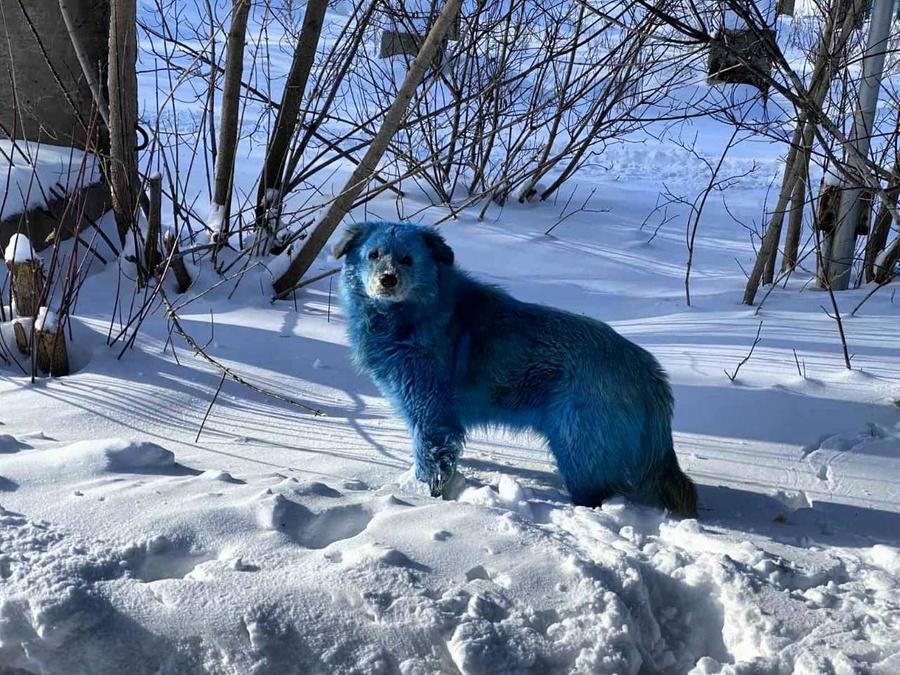 Теперь ещё и розовые собаки: Дзержинск вновь удивил 3 | ВЕТКУПОН - всё о животных: новости, ветуслуги, зоотовары в Москве