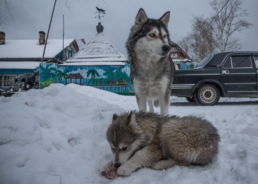 <p>Фото © ТАСС / Илья Питалев</p>