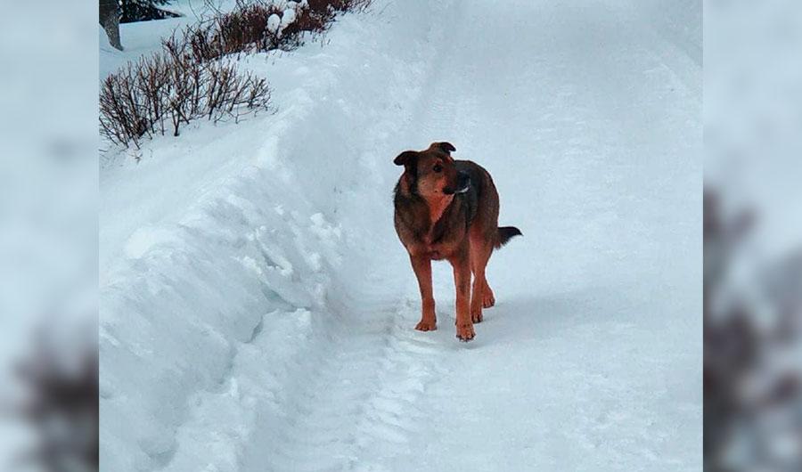 Теперь ещё и розовые собаки: Дзержинск вновь удивил 1 | ВЕТКУПОН - всё о животных: новости, ветуслуги, зоотовары в Москве