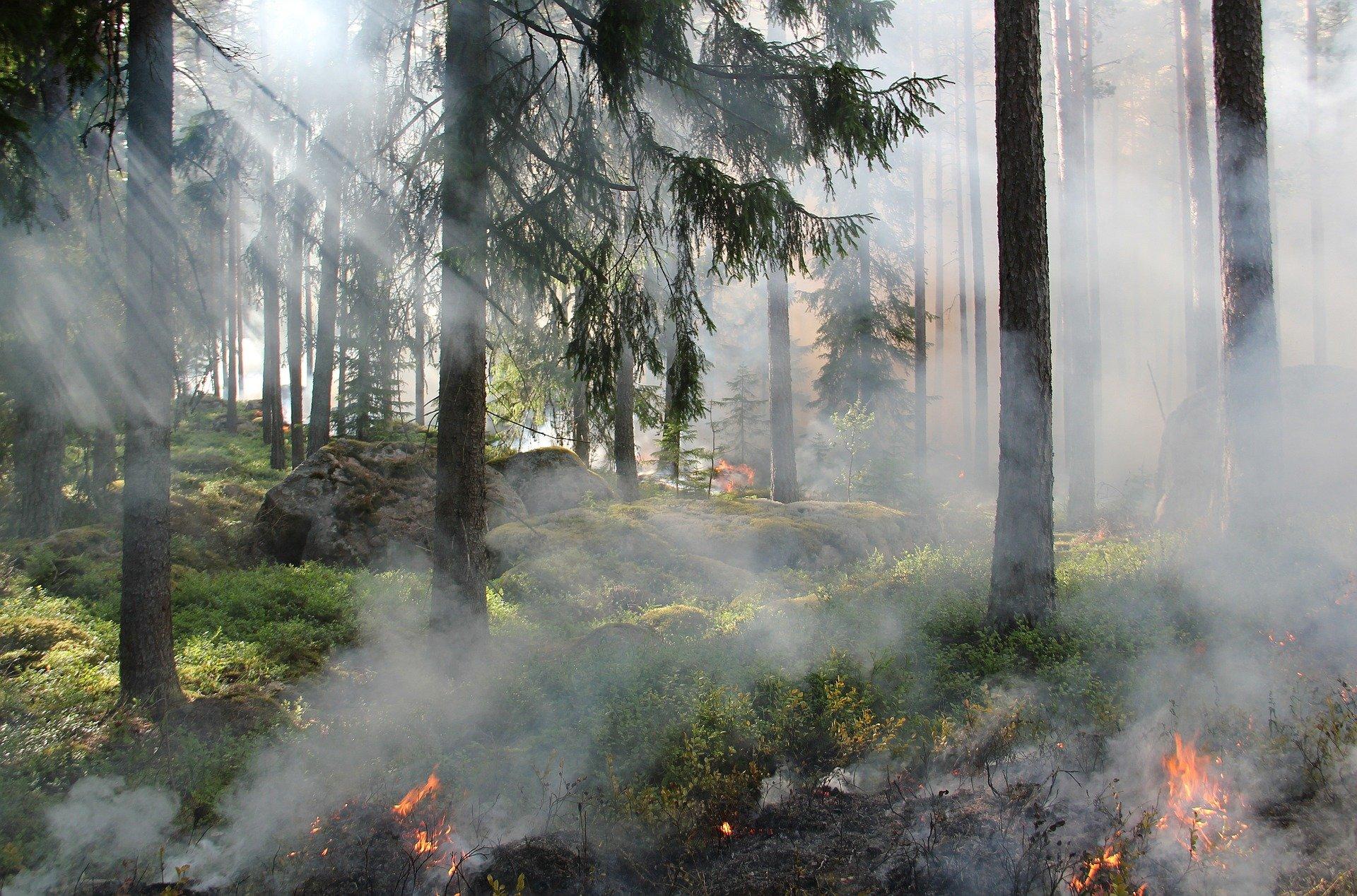 Штрафы за лесные пожары в России могут вырасти в 10 раз
