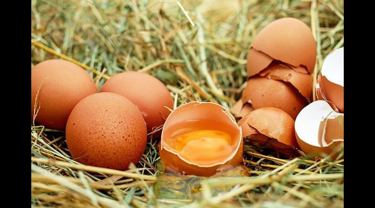 819576136620.3555 Врач рассказала о самом полезном способе приготовления яиц: холестерина можно не бояться