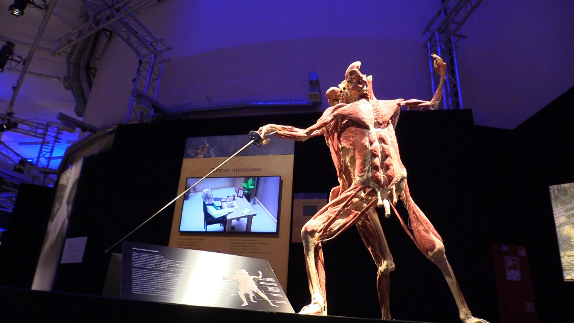 Тело в образе фехтовальщика. В разрезе на его спине можно рассмотреть внутренние органы человека в естественном положении. Фото © LIFE