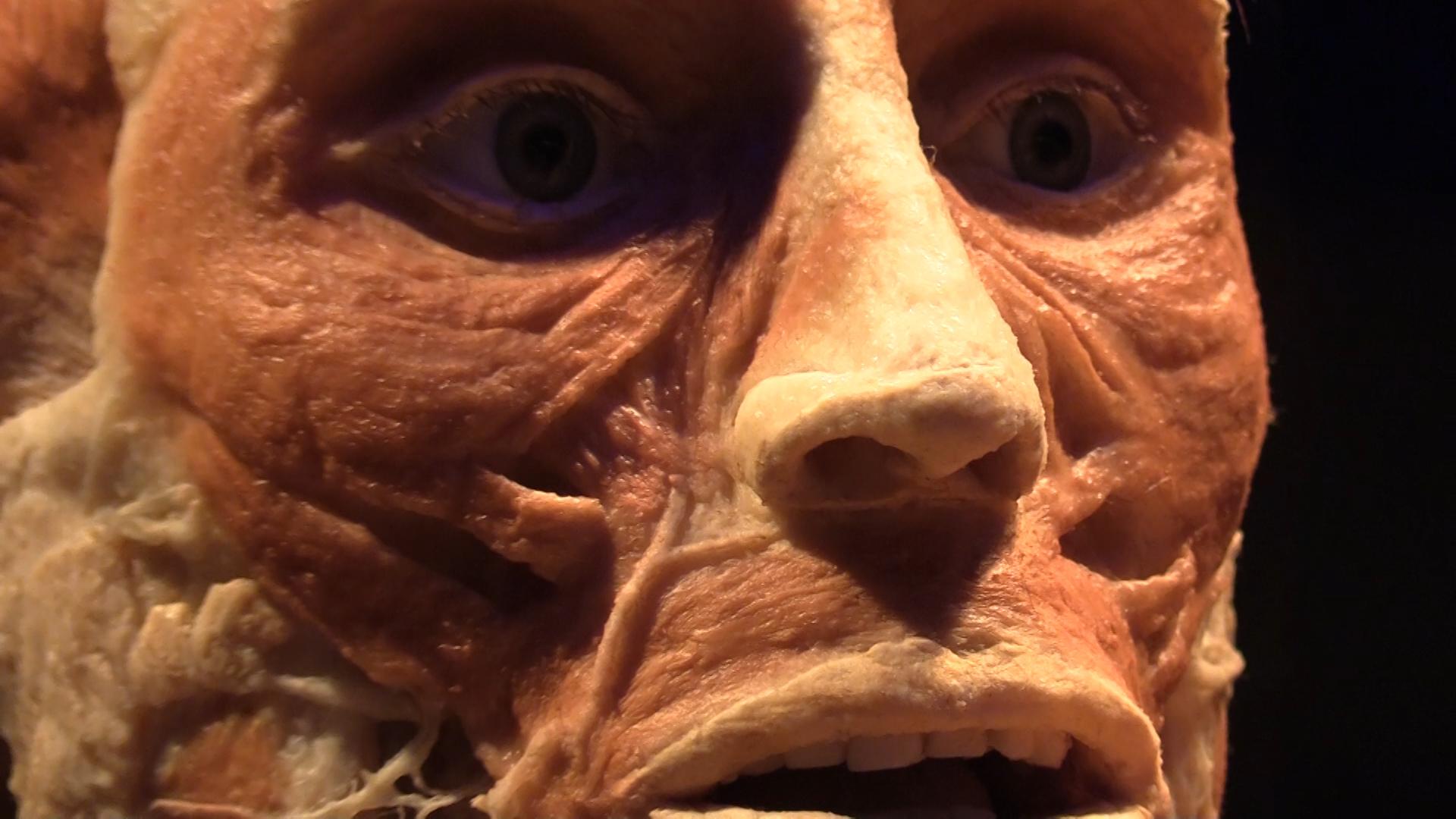 Особенно реалистично и пугающе выглядят застывшие лица экспонатов. Фото © LIFE