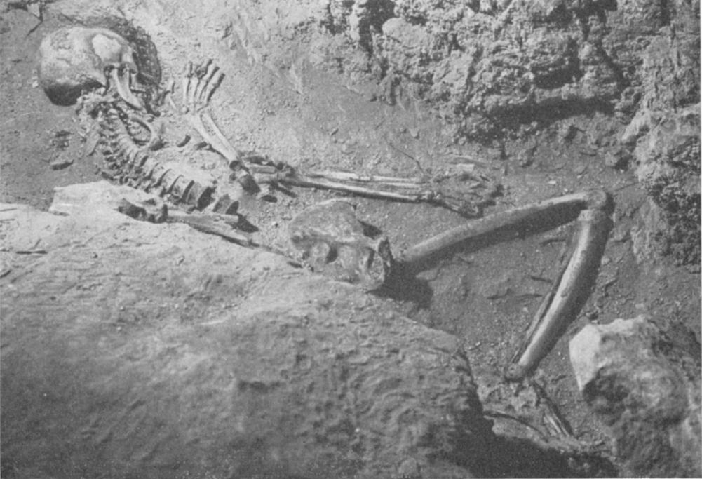 Останки, найденные в Пещере ужаса в Израиле в 1961 году. Фото © Israel Exploration Journal