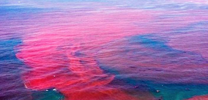 Красные приливы на Камчатке. Фото © kam24.ru