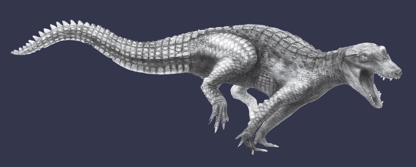 Реконструкция одного из представителей крокодиломорфов — Araripesuchus wegeneri. Фото © Wikipedia