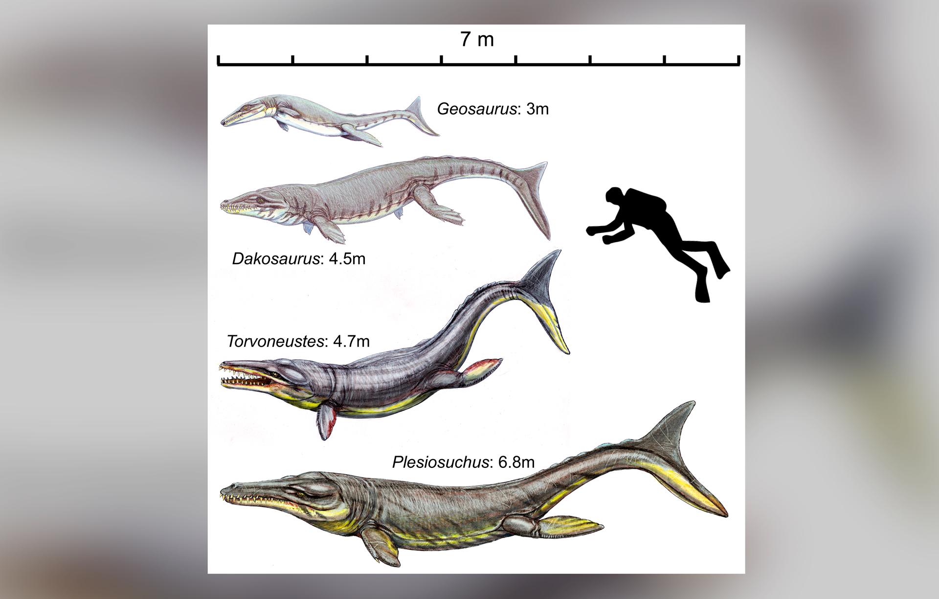 Реконструкция водоплавающих крокодиломорфов — талаттозухий. Фото © Wikipedia