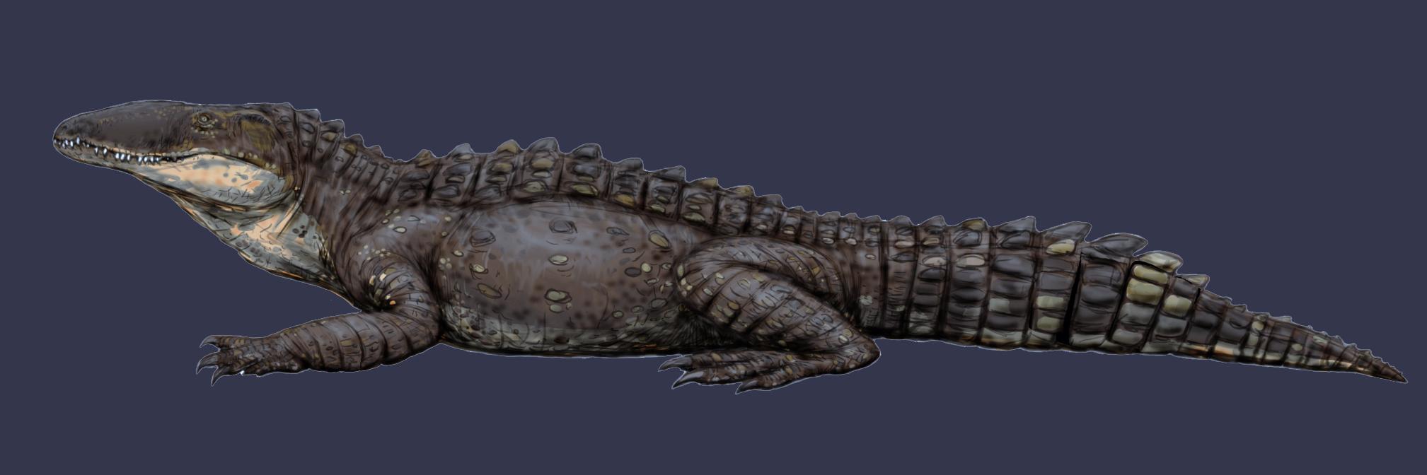 Реконструкция представителя вымершего рода Sebecus. Фото © Wikipedia