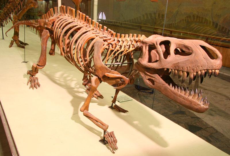 Фото © Палеонтологический музей имени Ю.А. Орлова РАН