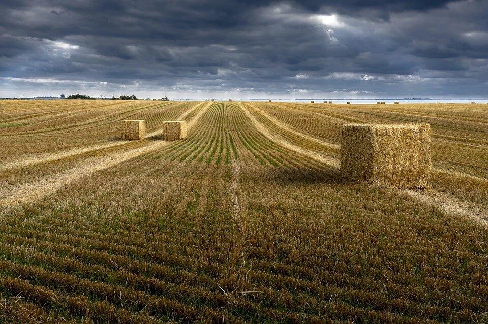 Семья экс-главы Минсельхоза возглавила рейтинг крупнейших землевладельцев России