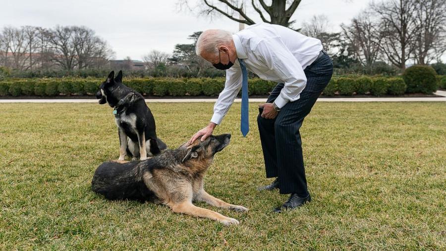 <p>Джо Байден и его немецкие овчарки Мейджор и Чемп. Фото © Adam Schultz / The White House</p>