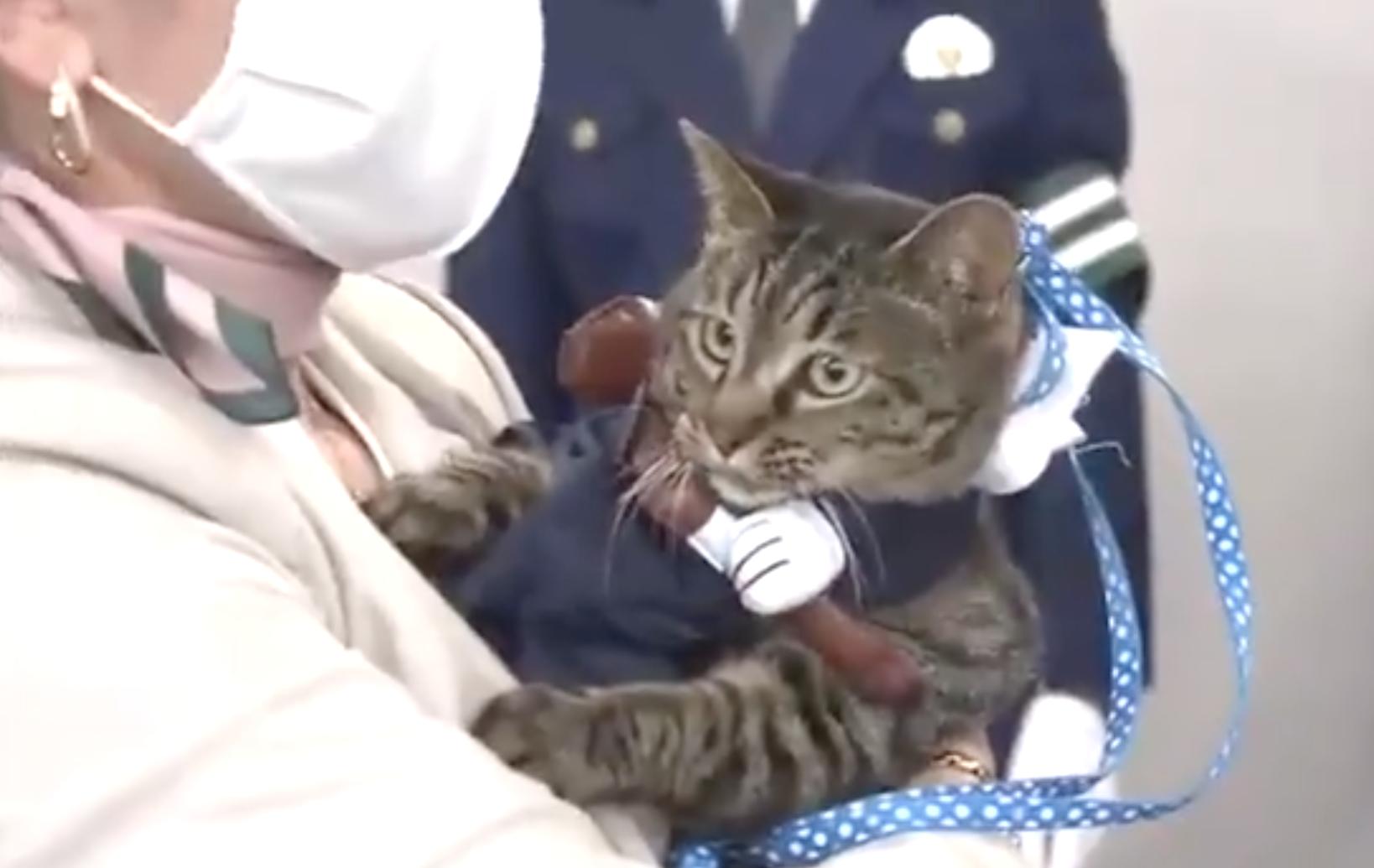В Японии кошка Коко стала главой полицейского управления, правда, всего на один день