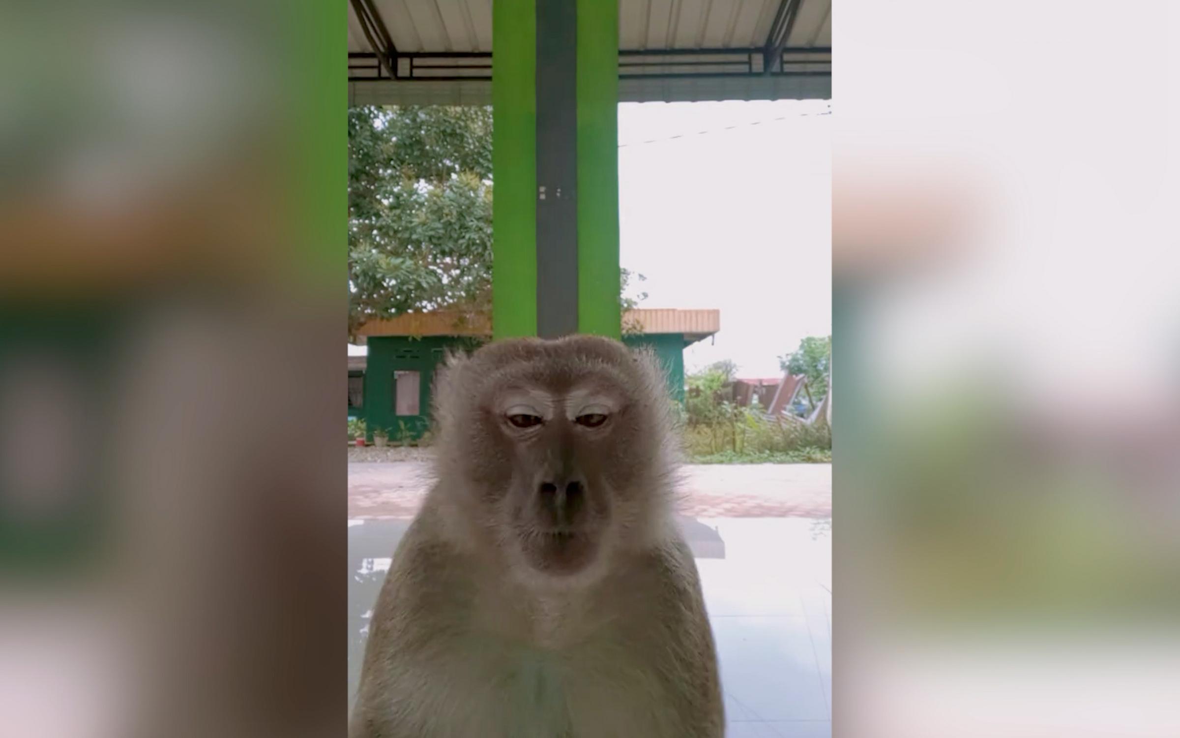 Кадр из видео © TikTok / annisadwiatikah2