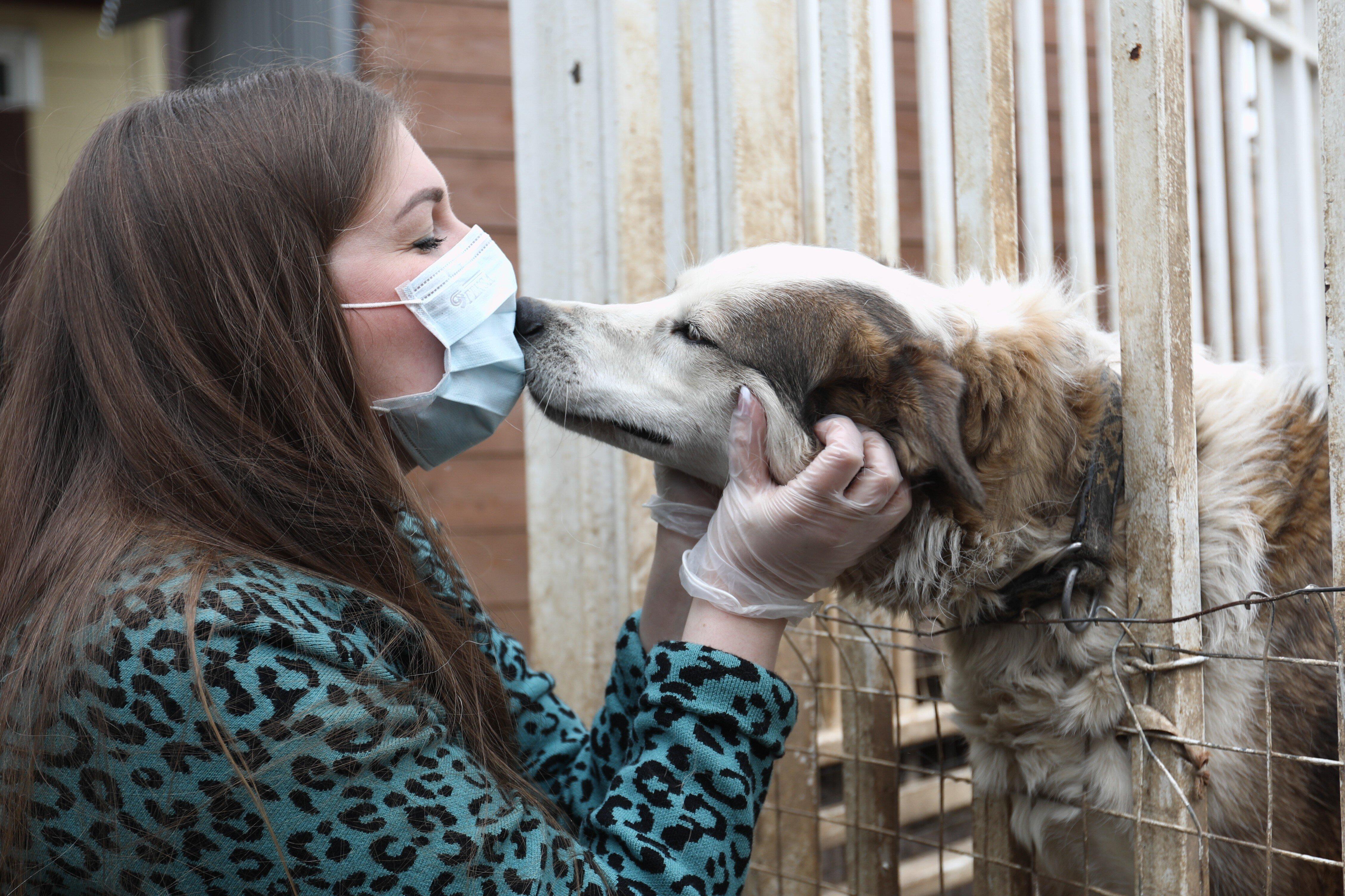 Учёные объявили кошек и собак распространителями британского штамма коронавируса