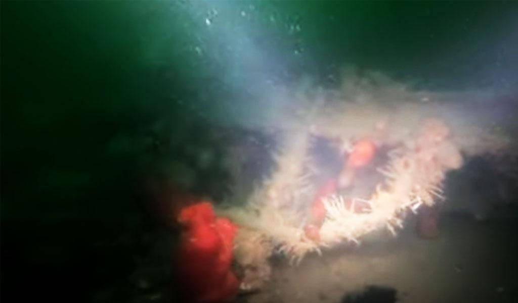 1523494172058.48 У берегов Сахалина дайверы искали самолёты, а нашли огромное судно — видео