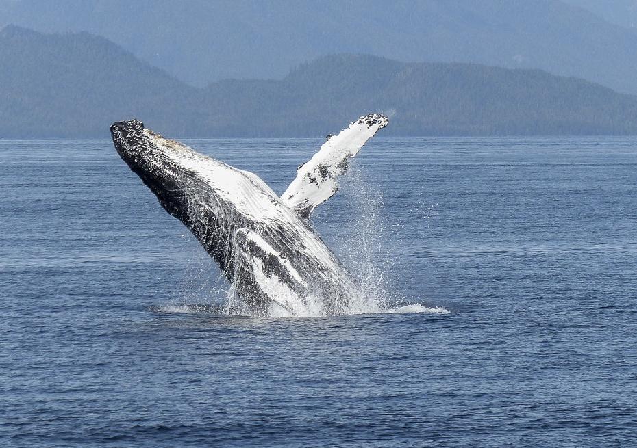 В России хотят запретить вылов китов и дельфинов