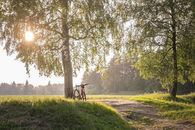 """""""Летняя погода"""": аномальное тепло придёт в Центральную Россию и отправится в Сибирь"""