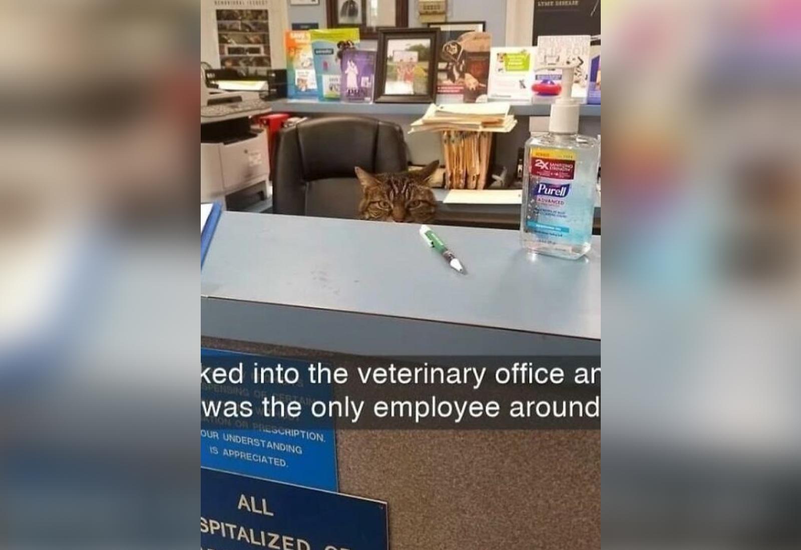 Фото © Reddit / CatsWithJobs