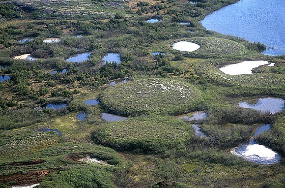 Торфяные холмы пальсы в вечной мерзлоте. Фото © Wikipedia