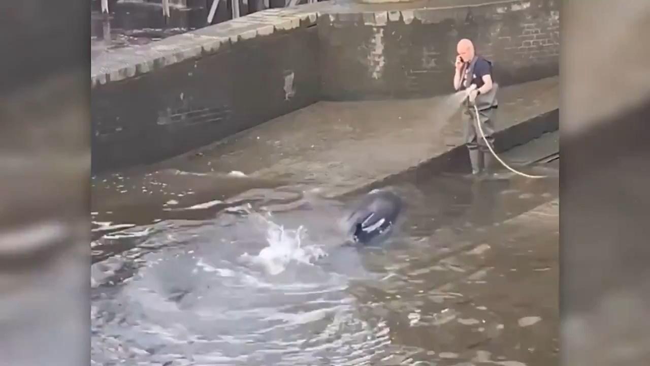 Спасён китёнок, попавший в западню в Лондоне