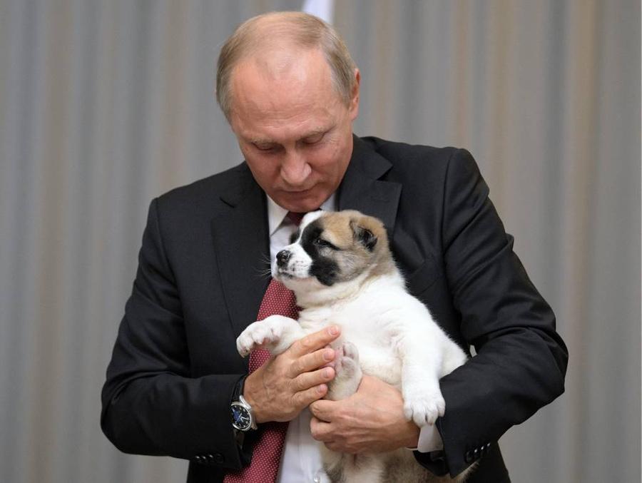 <p>Президент России Владимир Путин со щенком породы алабай. Фото © ТАСС / Дружинин Алексей</p>