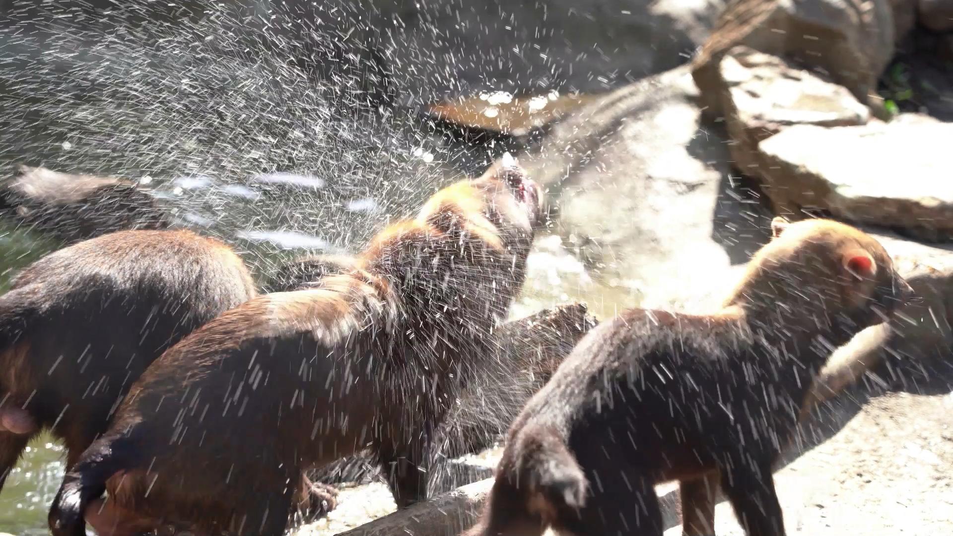 Ванны, душ и ледяные торты: в Московском зоопарке показали, как спасают животных от аномальной жары