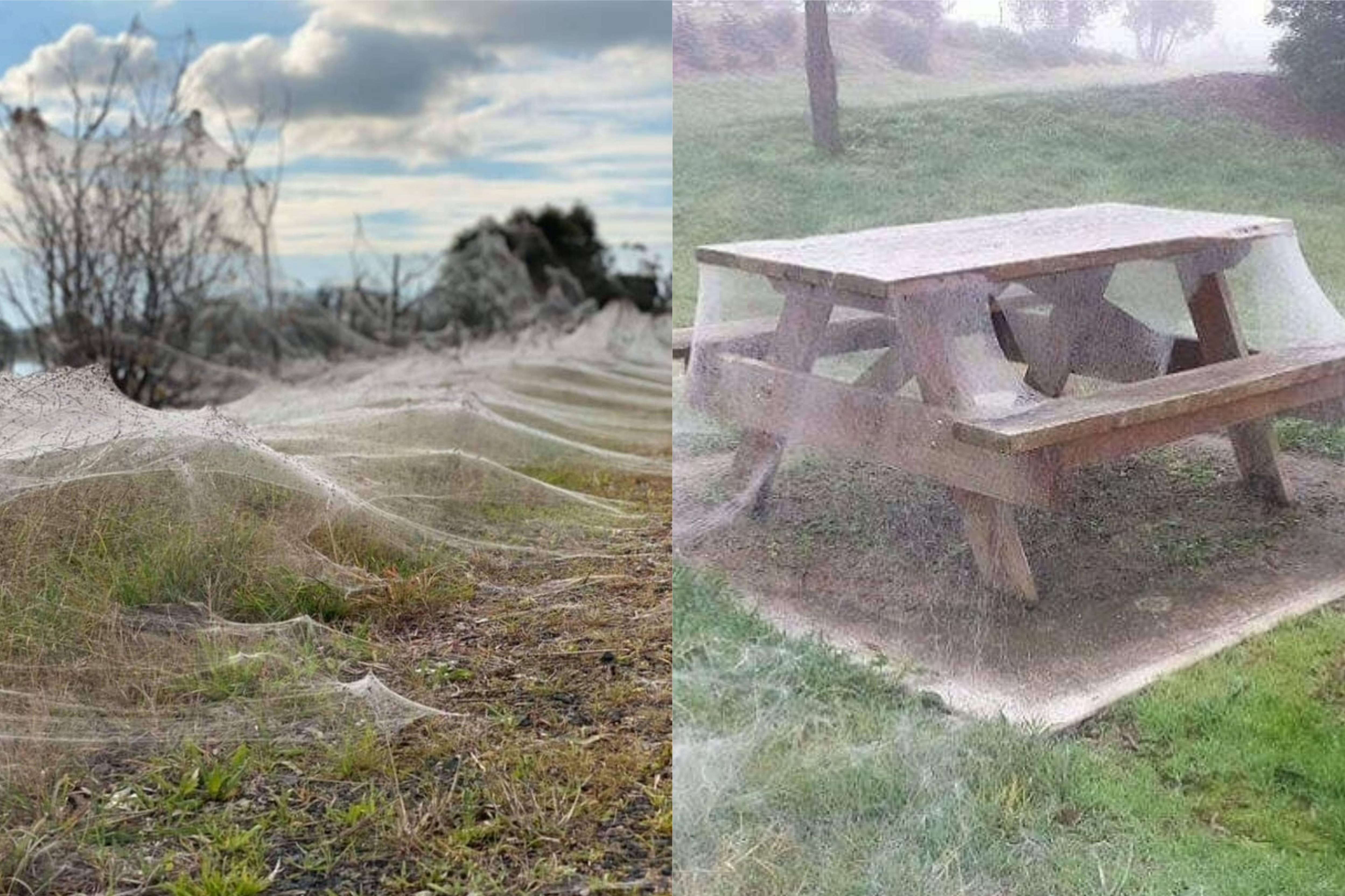 В Австралии пауки устроили апокалипсис, и вот 7 наглядных причин, почему туда не стоит ехать летом