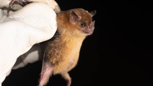 В Индии у летучих мышей выявили смертельно опасный для людей вирус