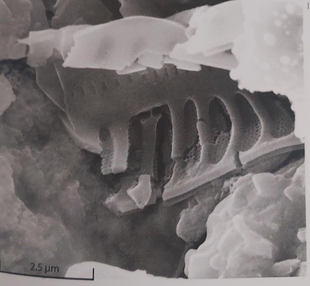 """Одна из иллюстраций книги """"Метеорит Оргей. Атлас микрофоссилий"""". Фото © LIFE"""