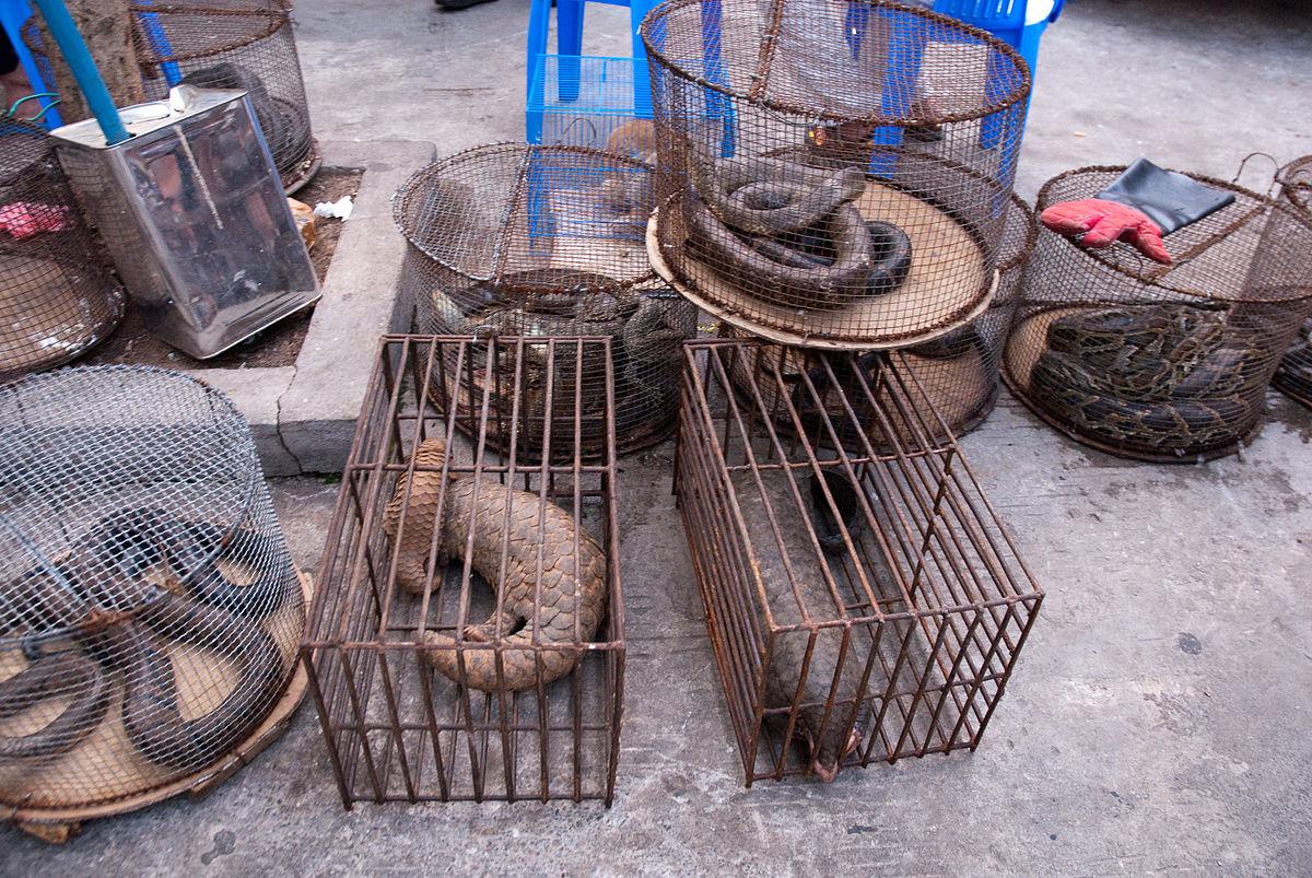 Рынок диких животных. Монгла, Мьянма. Фото © Fickr / Dan Bennett