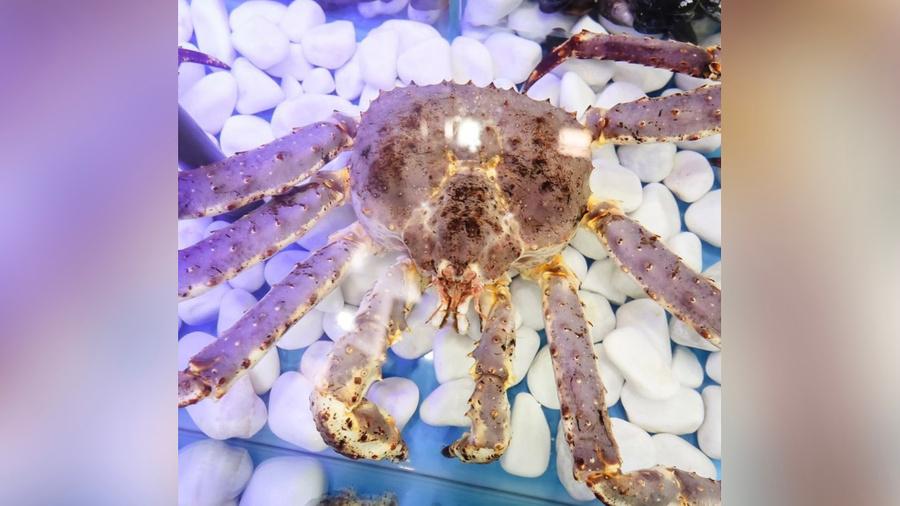 "<p>Фото © Instagram / <a href=""https://www.instagram.com/yura_the_crab/"" target=""_blank"" rel=""noopener noreferrer"">yura_the_crab</a></p>"