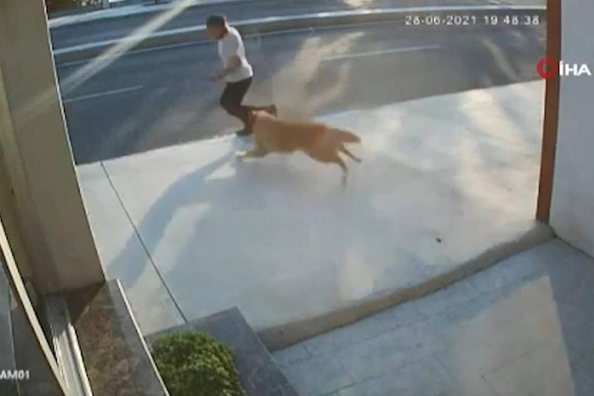 751762293070.9006 Камеры засняли, как игривый пёс испугал прохожего — и тот угодил прямо под грузовик