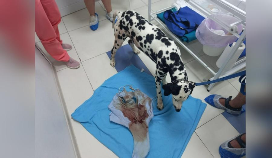 """В Екатеринбурге хозяин изрезал свою собаку ножом. Фото © VK / Благотворительный фонд """"ЗООзащита"""""""