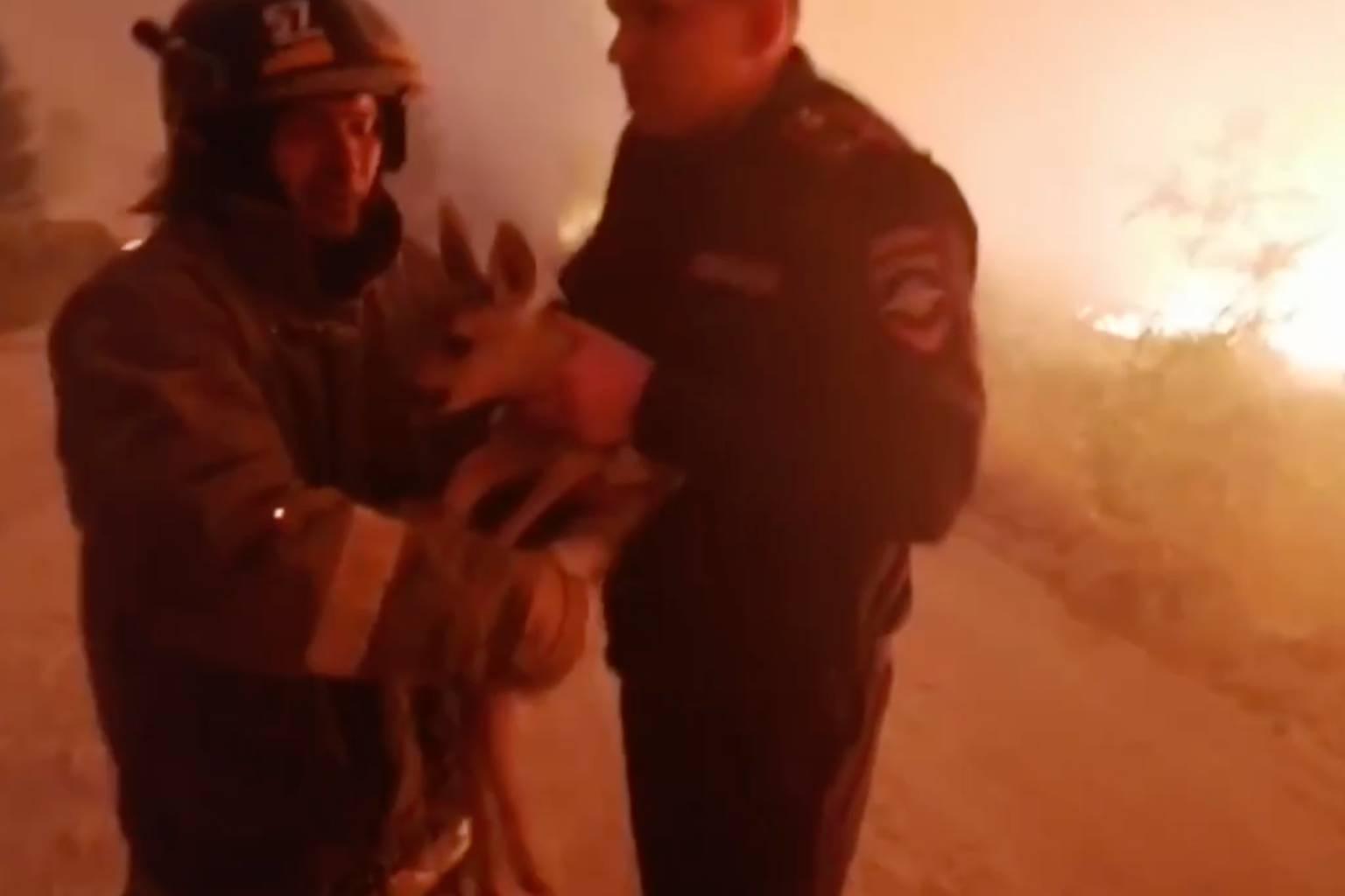Челябинские пожарные спасли Бэмби из охваченного огнём леса
