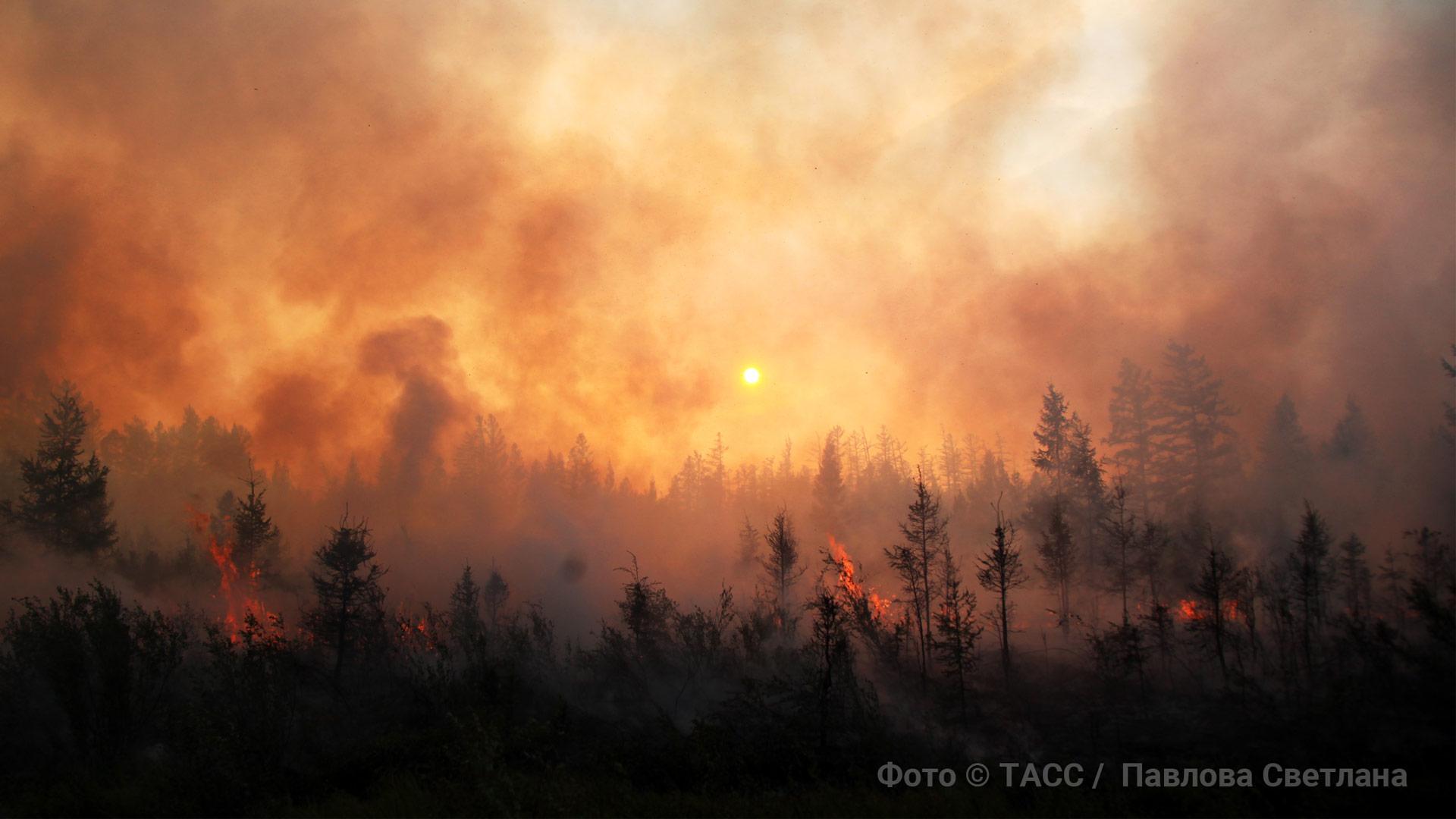 Огненная завеса: Почему в России опять горят леса