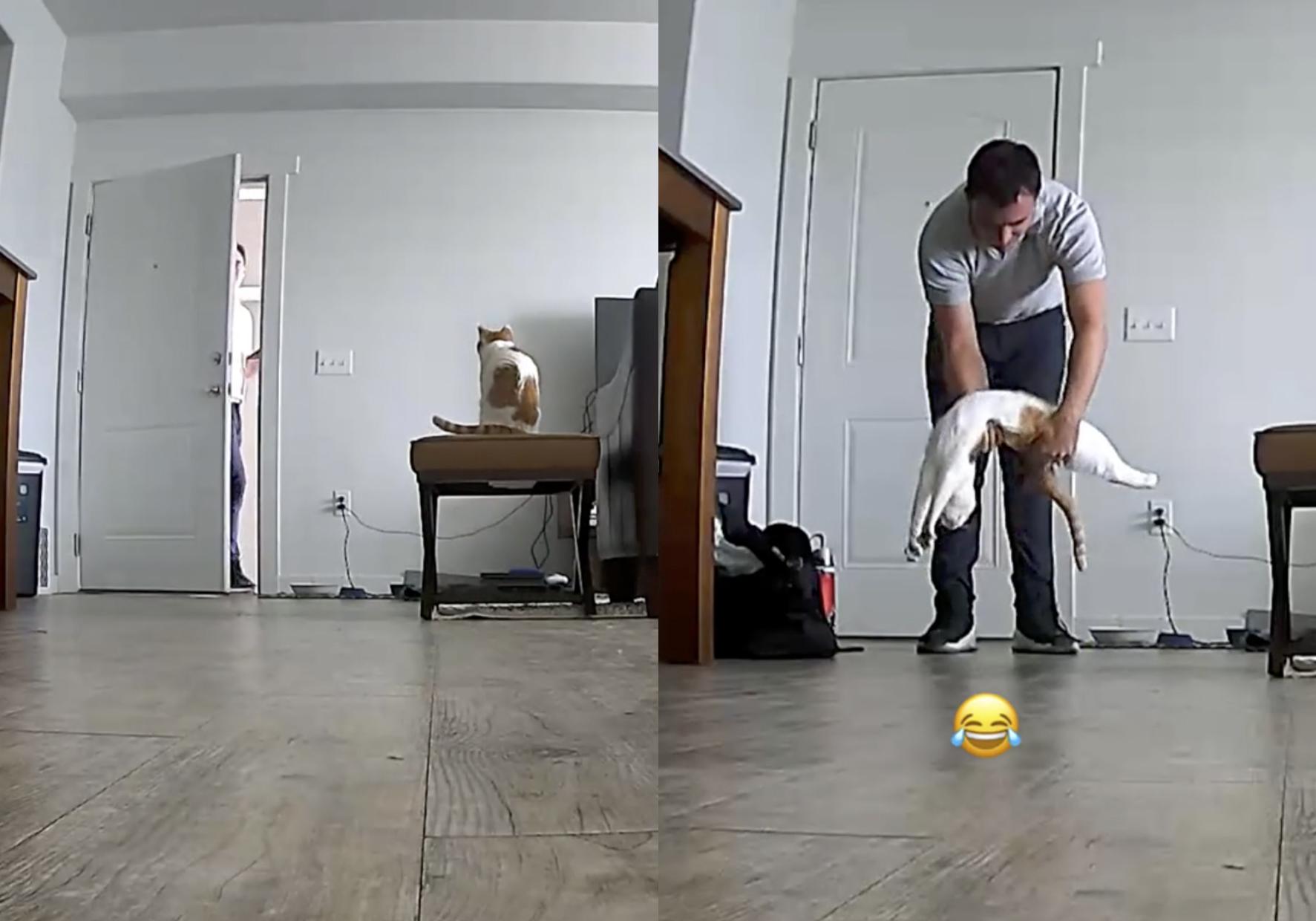 Кадры из видео © TikTok / cat.mando