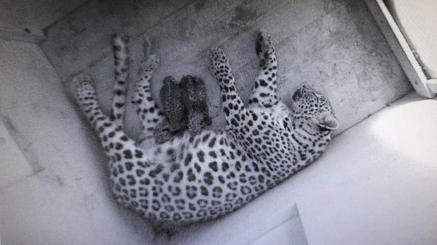 <p>Фото © Сочинский национальный парк</p>