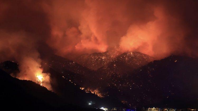 Эрдоган раскрыл вероятную причину масштабных лесных пожаров в Турции
