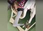 СК завёл дело из-за видео с привязанным к стулу в больнице сиротой. Фото © Соцсети