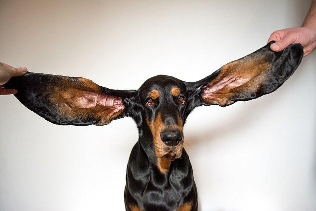 Фото © Guinness World Records