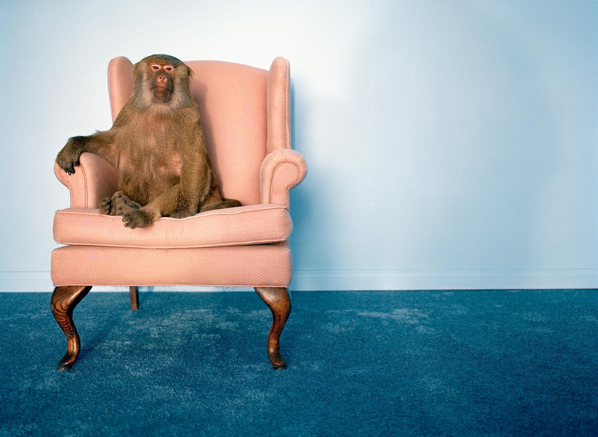 Всё ещё хотите сфотографироваться с обезьянкой? Фото © Getty Images