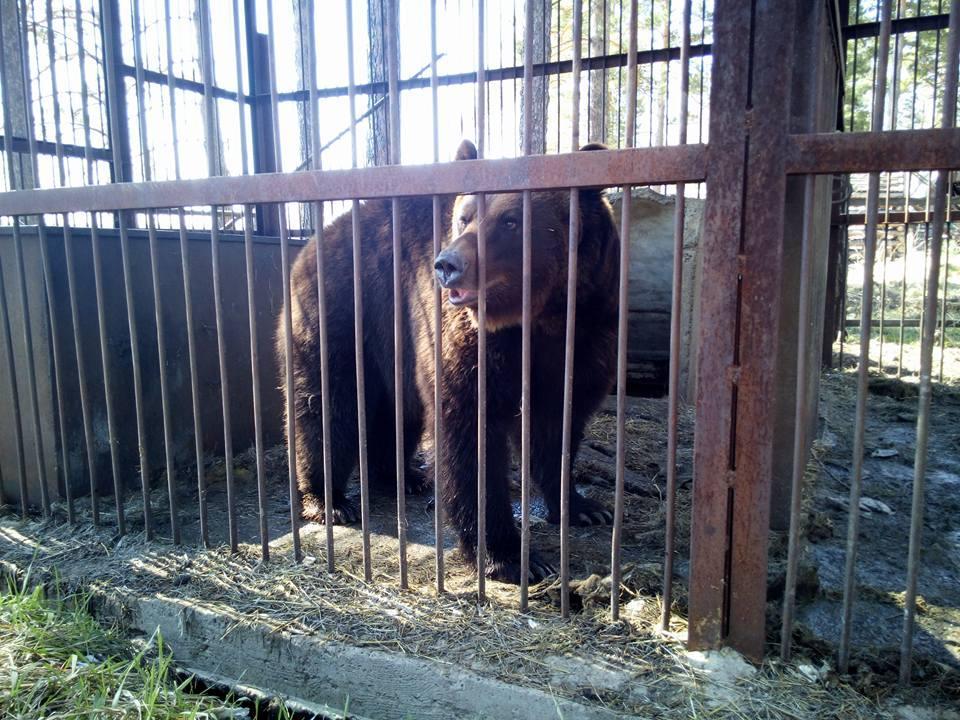 Неизвестно пока, выжила ли в огне медведица Маша. Фото © Facebook / hardzaimka