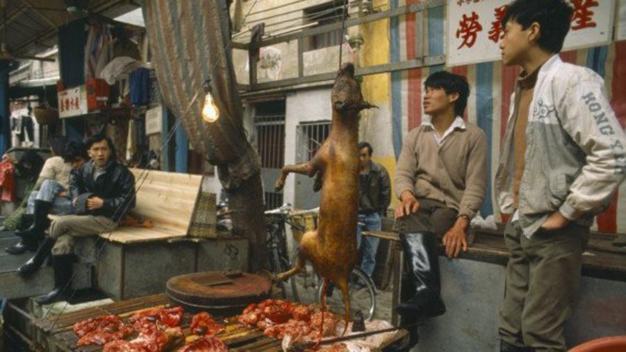 Фестиваль собачьего мяса. Город Гуанчжоу (Китай). Фото © Uglich-jj.livejournal.com