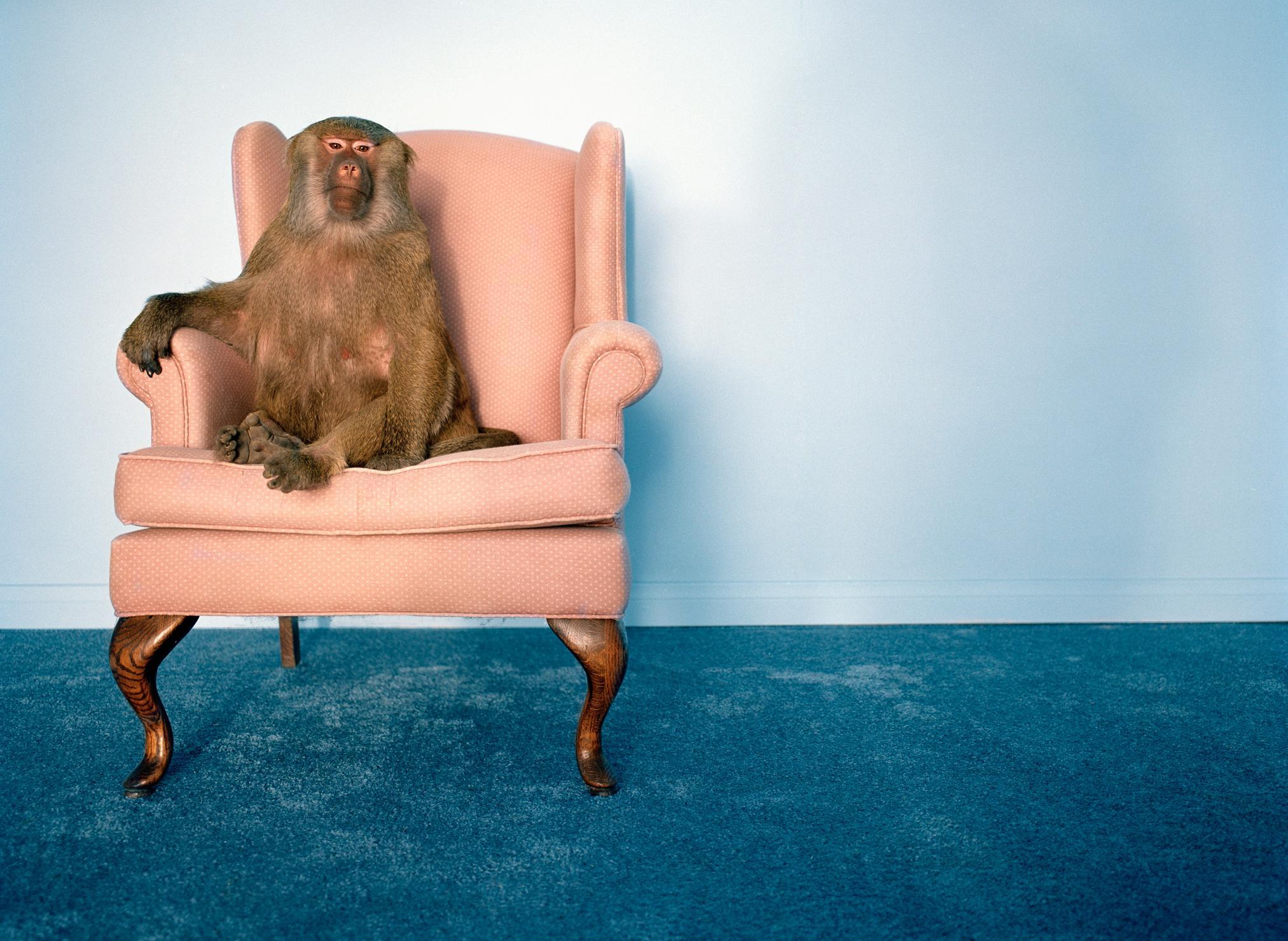 Хотите сфотографироваться с обезьянкой? Фото © Getty Images