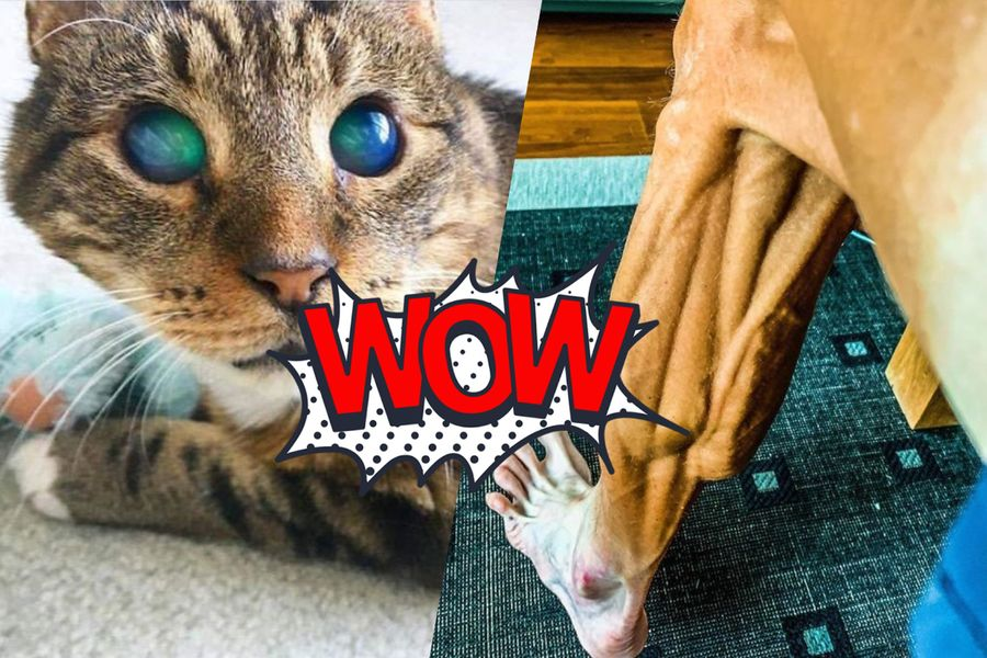 "<p>Коллаж ©LIFE. Фото ©Reddit / <a href=""https://www.reddit.com/r/aww/comments/akl1vp/my_friends_blind_cat_soren_has_amazing_eyes/"" target=""_blank"" rel=""noopener noreferrer"">DemonreachDaycare</a><strong style=""font-weight: bold;"">; </strong><a href=""https://www.instagram.com/p/B2_qixBFg_Z/"" target=""_blank"" rel=""noopener noreferrer"">janibrajkovic</a></p>"